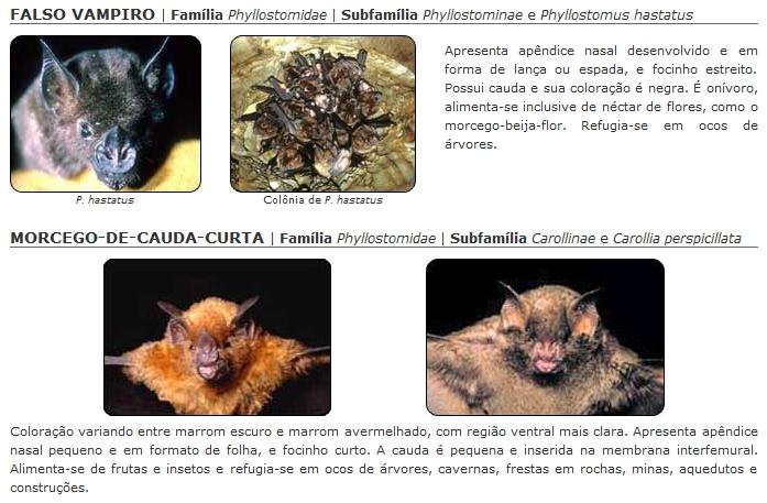 a diferenca entre meia lua e cauda de morcego